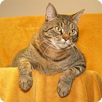 Adopt A Pet :: Felix - Milford, MA