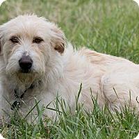 Adopt A Pet :: Reagan - Broken Arrow, OK