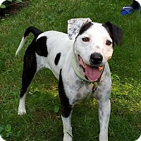 Adopt A Pet :: Nelly - New Oxford, PA