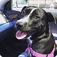 Adopt A Pet :: Mira Sorvino - Jersey City, NJ