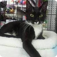 Adopt A Pet :: TRIXIE - Ridgewood, NY