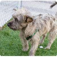 Adopt A Pet :: Naboo - Las Vegas, NV