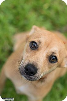 Lucky Dog Small Breed Rescue Wisconsin