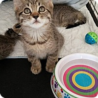 Adopt A Pet :: Cortland - Middletown, NY