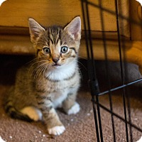Adopt A Pet :: Jason - Morgantown, WV