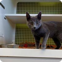 Adopt A Pet :: Isis - El Paso, TX