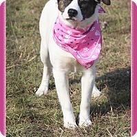 Adopt A Pet :: Isabelle - Hillsboro, TX