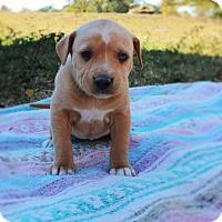 Adopt A Pet :: Elsa $250 - Seneca, SC