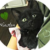 Adopt A Pet :: Winston - Lancaster, CA