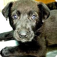 Adopt A Pet :: Diesel - Sidney, ME