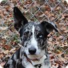 Adopt A Pet :: Zeke