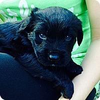 Adopt A Pet :: Buster - Miami, FL