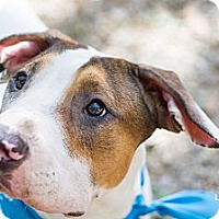 Adopt A Pet :: Nacho - Hagerstown, MD