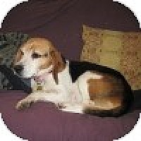 Adopt A Pet :: Thelma - Novi, MI
