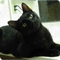 Adopt A Pet :: Licorice - Sacramento, CA