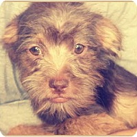 Adopt A Pet :: Alvin - Lake Forest, CA
