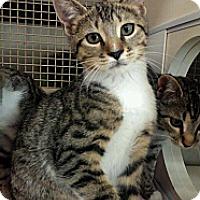 Adopt A Pet :: Dixon - Stafford, VA