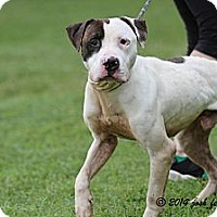 Adopt A Pet :: Cory - Chicago, IL