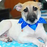 Adopt A Pet :: Andrew - Surrey, BC