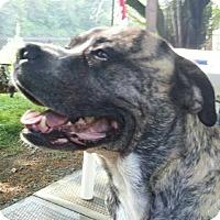 Adopt A Pet :: Hooch - Pierrefonds, QC