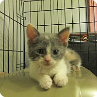 Adopt A Pet :: CASEE - Acme, PA