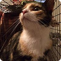 Adopt A Pet :: Melody - Monroe, GA