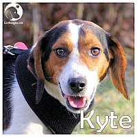 Adopt A Pet :: Kyte - Pittsburgh, PA