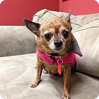 Adopt A Pet :: Chikah - Grayslake, IL