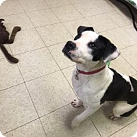 Adopt A Pet :: Christy - Cleveland, OH