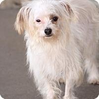 Adopt A Pet :: Tibbits - Woonsocket, RI