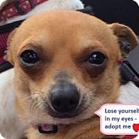 Adopt A Pet :: Peanut Butter - San Francisco, CA