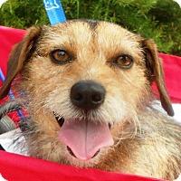 Adopt A Pet :: Bentley - Roseville, CA