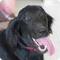 Adopt A Pet :: Jethro - Fresno, CA