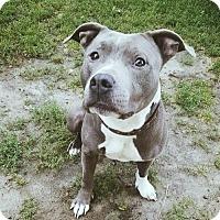 Adopt A Pet :: Spike Lee - Williston, VT
