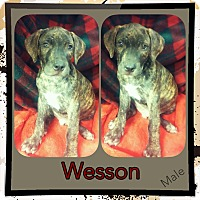 Adopt A Pet :: Wesson meet me 9/9 - Manchester, CT
