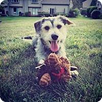 Adopt A Pet :: JJ - bridgeport, CT