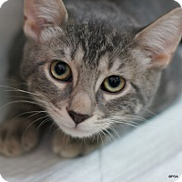 Adopt A Pet :: Slater - East Hartford, CT