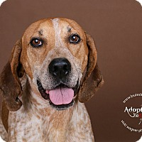 Adopt A Pet :: Andy - Cincinnati, OH