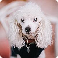 Adopt A Pet :: Danny - Portland, OR