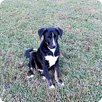 Adopt A Pet :: Cookie - Aurora, CO