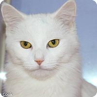 Adopt A Pet :: Angelica - Ann Arbor, MI