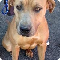 Adopt A Pet :: Tara - Canoga Park, CA