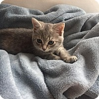 Adopt A Pet :: .Monroe - Baltimore, MD