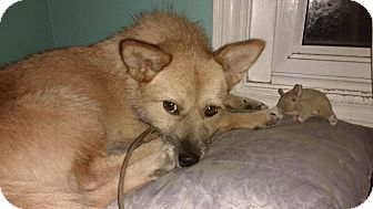Border Terrier Mix Dog for adoption in Lucknow, Ontario - JESSIE- kOREA