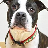 Adopt A Pet :: Brandy - Dublin, CA