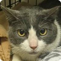 Adopt A Pet :: Calvin - Medford, MA