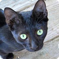 Adopt A Pet :: Hoops - Gonzales, TX