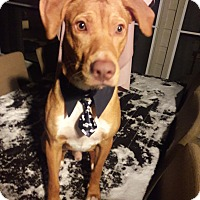 Adopt A Pet :: Chevy - Austin, TX