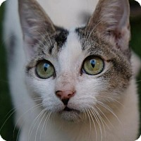 Adopt A Pet :: Olivia - Green Bay, WI