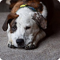 Adopt A Pet :: Olie Olie Oxen Free - Salt Lake City, UT